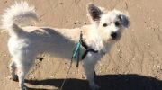 Прохожий парень сделал псу искусственное дыхание прямо на пляже