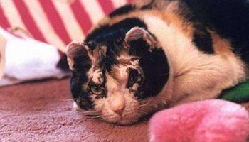Чтобы спасти своих котят, кошка, рискуя жизнью, несколько раз возвращалась в пылающий дом