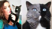 Двуликий кот Нарния стал отцом, и природа удивила снова: фото оригинальных котят