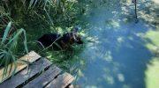 Рыбак нашел в пруду щенка овчарки. Кроха стоял в воде и ничего не видел и не слышал