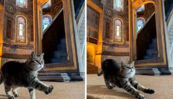 Истинная хозяйка Собора Святой Софии в Стамбуле — кошка Гли