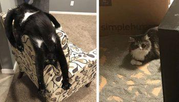 Надо срочно котенка в дом! Без кота и жизнь не та!