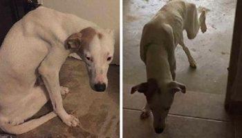Молодая девушка не прошла мимо пса, который искал у людей помощи и поддержки