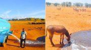 Диким животным, изнывающим от жажды, мужчина каждый день возит воду