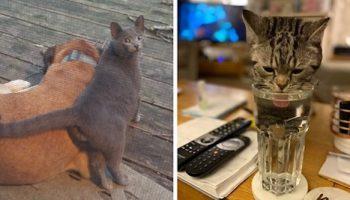 18 котиков в гостях не у себя дома. Люди обнаруживали у себя дома котов, но это были вообще не их коты!