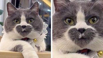 10 фото кошек, которые раскрашенные природой не по правилам
