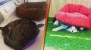 15 фото, доказывающих, что кошки не ценят вещи, которые для них покупают