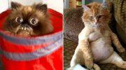20 очень смешных фотографий с котами, которые поднимут настроение на раз-два