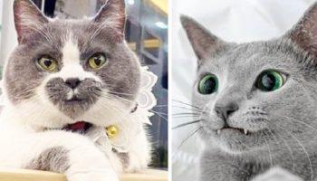 Природа не по стандарту раскрасила этих замурчательных кошек