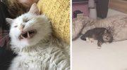17 фотографий чихающих котиков. Люди взяли и понаделали из этого мемов
