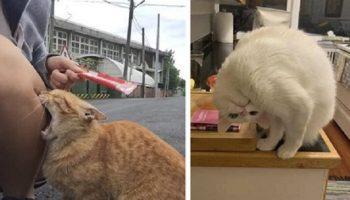 Не понятно: то ли эти коты прокачались до нового уровня, то ли окончательно сломались
