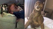 9 смешных фотодоказательств, что собаки полная копия своих хозяев