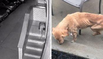 Нуждающаяся в помощи собака, пришла к парню, который забыл закрыть дверь в дом
