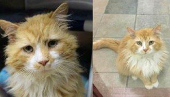 За верность и любовь, кота обрекли на гибель, он шел домой 19 км