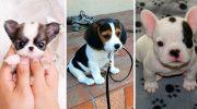 25 невероятно милых щенков, на которых можно любоваться очень долго (25 фото)