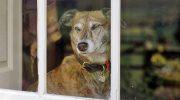 Как пес чувствует, что скоро придет домой хозяин?