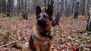 Семья приютила худого больного пса, который забрёл к ним на дачу