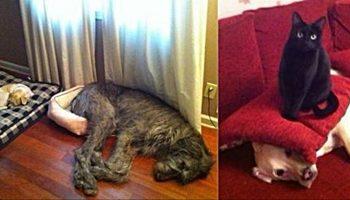 16 случаев вопиющей несправедливости с которой столкнулись эти собаки…