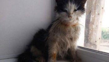 История бездомного котенка, который превратился из гадкого утенка в чудесного лебедя