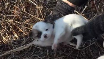 Собака пошла к людям за едой, ей было нечем кормить щенков