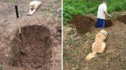 Пёс стоял и смотрел на свою могилу, которую копал его хозяин