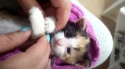Двухнедельного котенка Мару спасли ребята байкеры