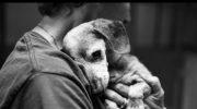Спустя долгие годы, старый и почти слепой пес узнал своего хозяина