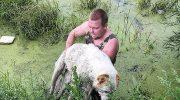 Иркутянин спас тонущую в болоте собаку, которая не могла уже ни лаять, ни шевелиться