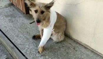 Под авто лежала маленькая собачка Мотя с больной лапкой