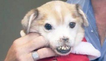 Нашел ли новый дом необычный пес, у которого отсутствует…нос