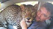 С леопардом, которого он забрал из зоопарка, парень живёт в одной квартире