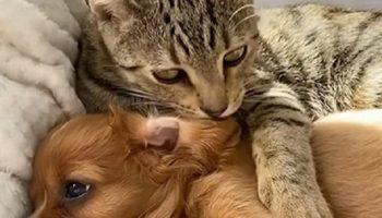 Чем закончилось история, как щенка-потеряшку, защищал бездомный кот