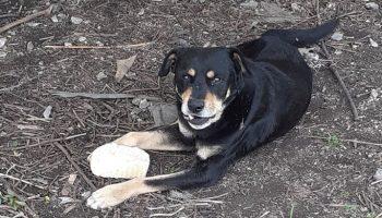 Больной и никому не нужный пес, обнимал двумя лапами кусок хлеба