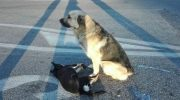 Сердца людей во всем мире, тронула дружба двух собачек