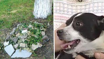 Похороненный пес, которого сбила машина, через 14 часов снова стоял под дверью хозяев