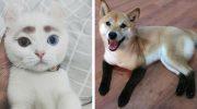 Сплошное очарование: котики и песики с неповторимой внешностью