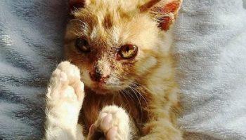 Маленький котенок был настолько голоден, что ел землю