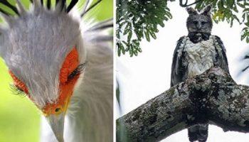 Если будет проводиться конкурс красоты среди птиц, то вот 30 ярких кандидаток