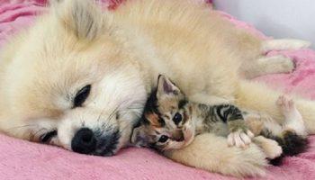Трогательная дружба домашнего песика и котенка. Я без тебя никуда!