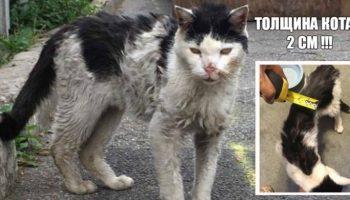 Моля о помощи, голодный кот, буквально, рухнул у ног зоозащитницы