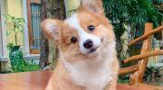 Самый очаровательный щенок на свете — Малышка