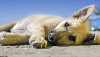 Голландия — единственная в мире страна где нет бродячих собак. Как им это удалось?