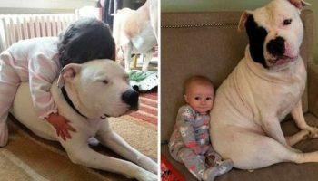20 фотодоказательств о безусловно сильной любви домашних животных