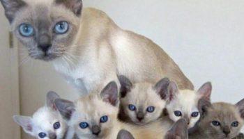 25 фото домашних кошек и их миниатюрных копий