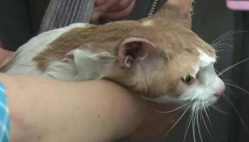 Кота, который прожил в стене торгового центра целых 2 года, спасли в Корее
