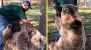 Медведица Соня, достигшая за время разлуки огромных размеров, сразу узнала своего спасителя