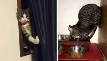 Проделки котеек, которые выложили в сеть хозяева, чтобы все посмеялись