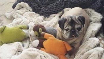 Собака по имени Ферджи уже просто не хотела жить!