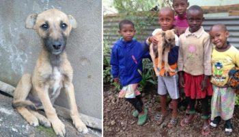 Дети не смогли предать щенка, хотя родители им кричали: «Выбросьте его на улицу!»