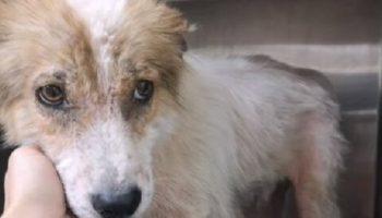 На свалке со старыми шинам, в одной из покрышек жила собака